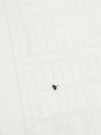 この虫が最近よく家の中を飛んでいて、なにかわかりますか? どこかでわいているのでしょうか? おすすめの殺虫剤などあったら、教えていただけますと助かります。 よろしくお願い致します!