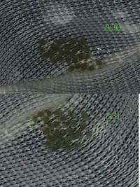 ミナミヌマエビの抱卵した親エビが☆になってしまったため、初めて人口孵化に挑戦しています。 抱卵を確認したのが8/23で24日に親エビが☆になっていました。。。 写真、分かりにくいですがこの卵はまだ生きているのでしょうか?
