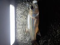釣れたんですが、この魚何ですか?