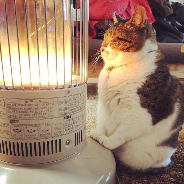 冬、ストーブにこんなに近づいてるネコは熱くないんでしょうか? . 熱くないなら、冬に公園でいるネコはむちゃくちゃ寒いんじゃないでしょうか?