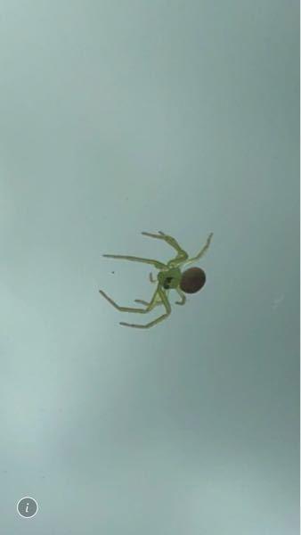 この蜘蛛、なんて名前ですか?? また、この黒いのは目ですか??かわいいので飼いたいですね笑笑