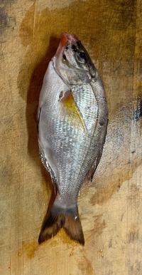 この魚ってなんの魚ですか??
