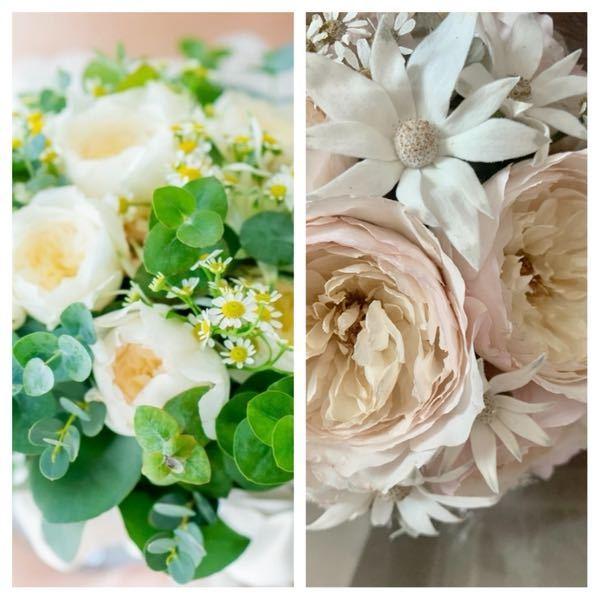 バラの品種名について教えて下さい バラのブーケを頂き、その際にバラの名前も教えて頂きましたが、その名前を忘れてしまいました。 情報は以下しかありませんが、 もし品種名分かれば教えてください。 正確でなくても構いませんので これじゃないかというものがあればぜひ。 <情報> ・切り花の状態の写真 左が生花の時、右がプリザーブドフラワーにした時 ・白バラですが、中心付近がほんのり、ほんの僅かに色味が残っているのが特徴らしいです ・花びら1枚1枚は柔らかみがあり 気持ちフリルがかっていた記憶があります ・日本語の名前でした 漢字か平仮名かは分かりませんが、平仮名で3文字の発音でした(ひびき、とか、つむぎ、とか、意味のある単語だった気がします) 葉っぱの形状などの有益な情報がない中で申し訳ありませんが、お力添え願います。