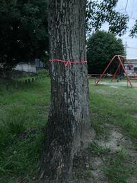 木に紐?を結ぶ理由って何ですか? オカルトとかスピリチュアル系のことが関係しますか?