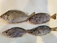 このお魚の名前をそれぞれ教えてください