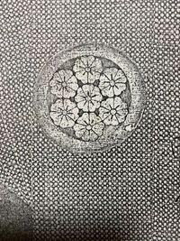 私の家の家紋が家紋帳に載ってないんです。 今年90になった祖父は 先祖は下総の国の殿様だったと言っていましたが 豪族の可能性もあります。  どなたかこの家紋についてご存知の方いらっしゃらないでしょうか? または何かヒントをいただけないでしょうか。  7本桜で花弁を辿ると円になります。