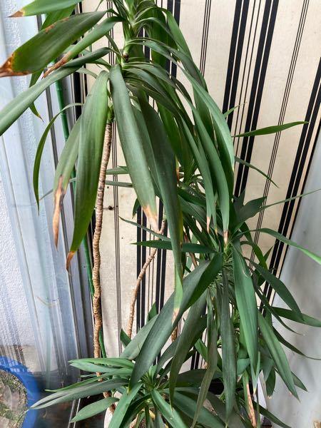 これってなんの植物ですか? 育て方が分からず検索しようにも名前が分かりません。
