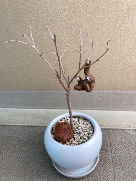 オリーブが枯れてしまいました。 葉が枯れてから、4ヶ月、 新しい芽も出ません。 もう枯れてしまったのでしょうか? 復活の可能性はありますか? アドバイスお願いします?