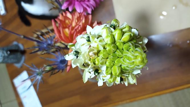この白い花の名前はなんですか?