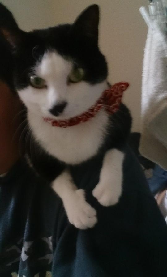 吉瀬美智子が離婚してフリーなので結婚前提で付き合いたいのですが、どうすればよいですか? 当方39歳のゴミ収集男です。 年収は500万です。 市の職員でゴミ集積ですが、公務員です。 私は相手にされますか? 顔はカンニング竹山似、話し方は出川哲朗です この猫はゴミ袋に入った状態で捨てられていました。 私のナイス判断でギリギリ助け出せました!