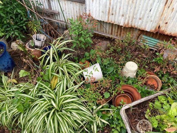 自宅の庭に使わないからと言って、 植木等が無造作に放置してあるのって、 めちゃくちゃ貧乏な家に見えませんか?