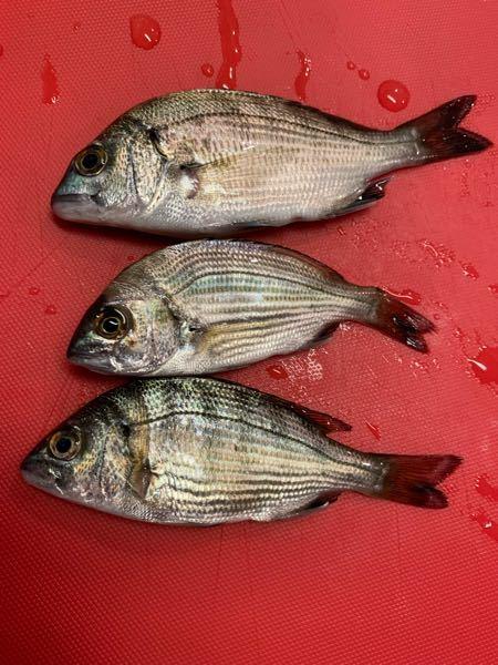 この魚ってなんて名前ですか?