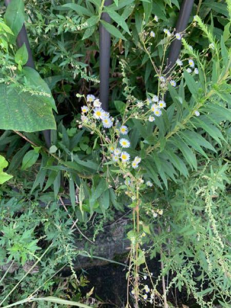 これは何の花でしょうか?教えてください!