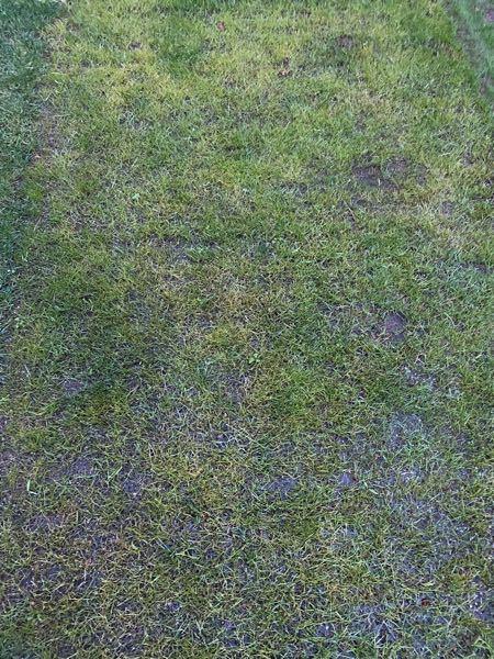ケンタッキーブルーグラスの殺菌剤についてですが 写真は7月末に種蒔をしたものです。 いろいろと調べてはみましたが、 なかなかコレという物が 見つかりません。 芝生初心者で何とかキレイな芝生にしようと 頑張ってますが...。 どうぞ、よろしくお願いいたします!