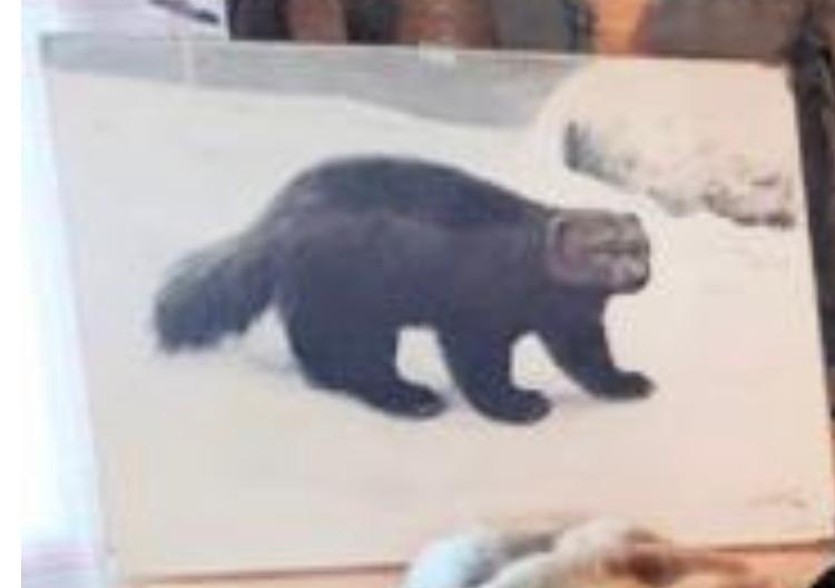 フィンランドの動物だと思いますが お分かりになる方、教えてください
