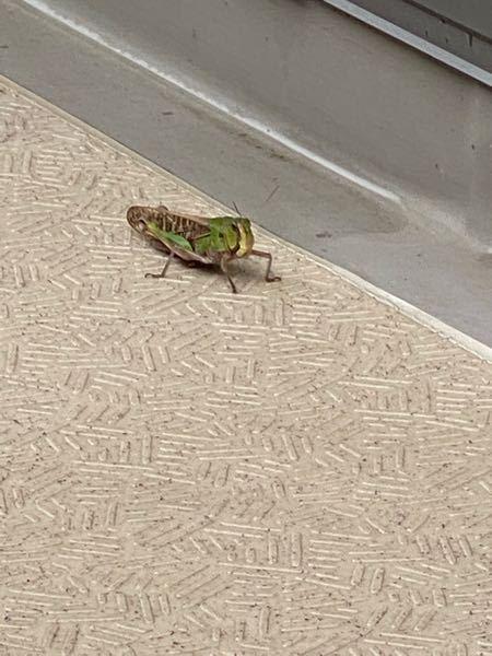 虫博士回答お願いします! 家の前に虫がいました。 大きさは5cmくらいです。 よろしくお願いします!
