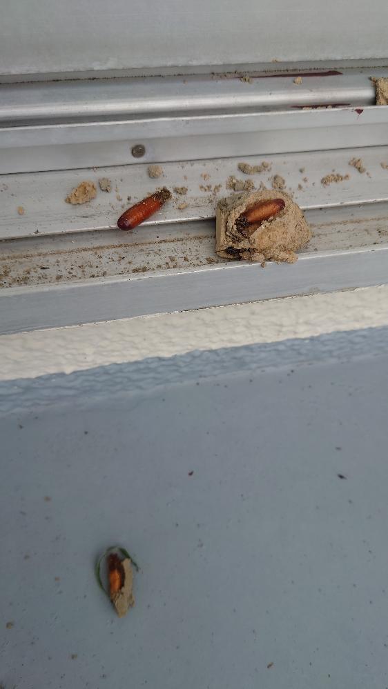 雨戸を開けたら土で作った巣が出て来ました。何の巣でしょう。