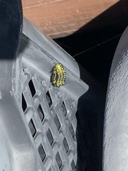 この毛虫?には毒はありますか? また、何て名前の虫でしょうか? 2~3センチほどの大きさでした。