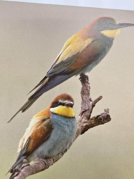 この鳥の名前を教えてください!