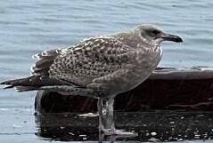 この鳥さん、名前をご存知の方いらっしゃいますか。
