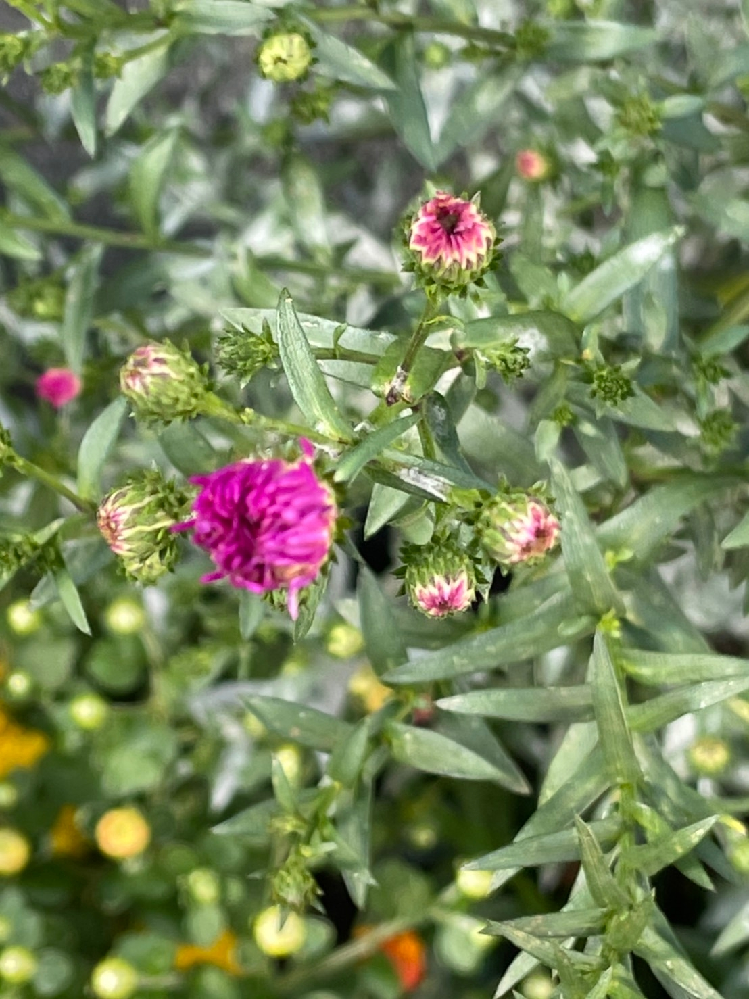 この花はなんていう花でしょうか?