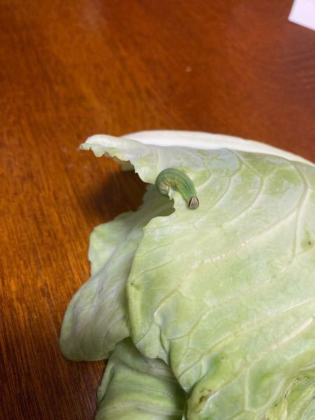これは何の幼虫かわかりますか?