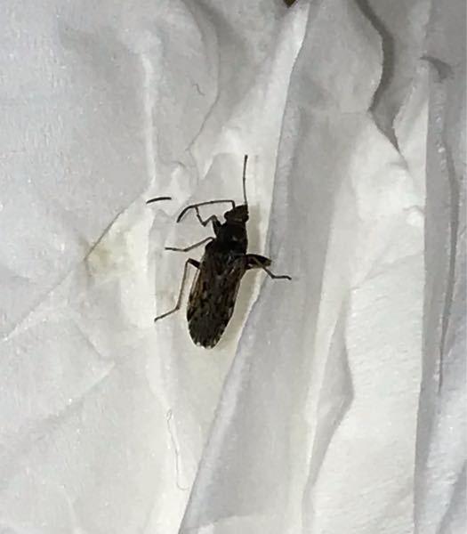 この虫はなんでしょうか?小さいです!