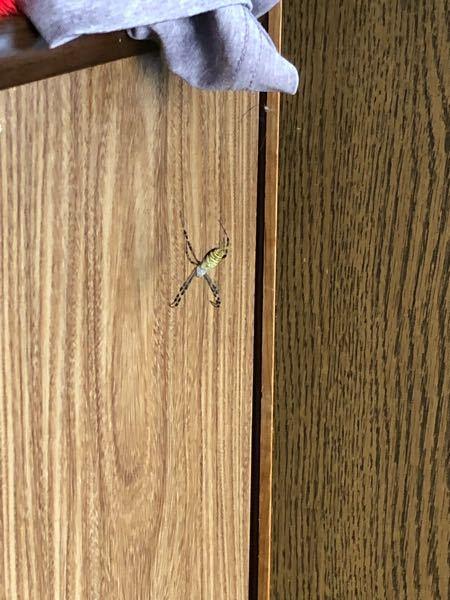 女郎蜘蛛だと思うのですが家の中にいました。 どうやって外に出したらいいですか??