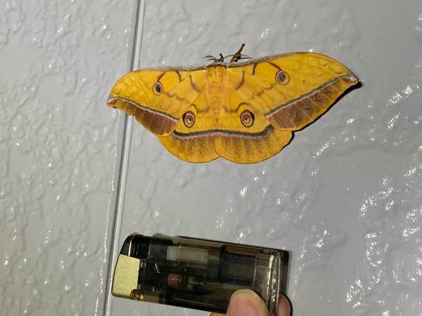 何虫ですか?珍しい?