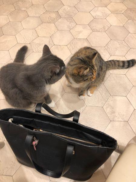 猫カフェの猫ちゃん縫い目をなめてましたが なんかありますか? おもちゃ反応なし