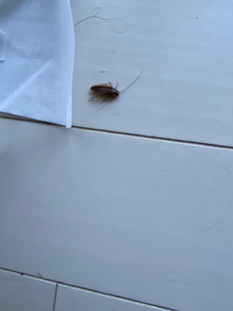 この虫の名前わかりますか?