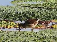この鳥の名前を教えてください。撮影日は9月20日で、撮影場所は兵庫県です。どうぞよろしくお願いいたします。