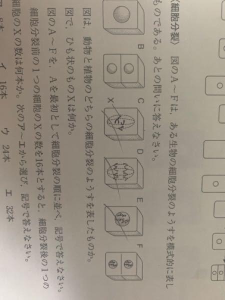 細胞分裂前の染色体を16本とすると、C、D、の染色体の数は何本ですか?