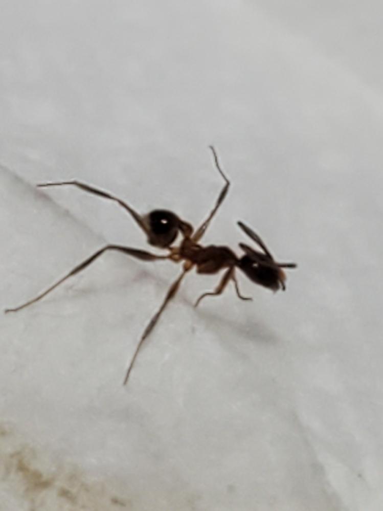 潰してしまったのですがこれって何アリですか?