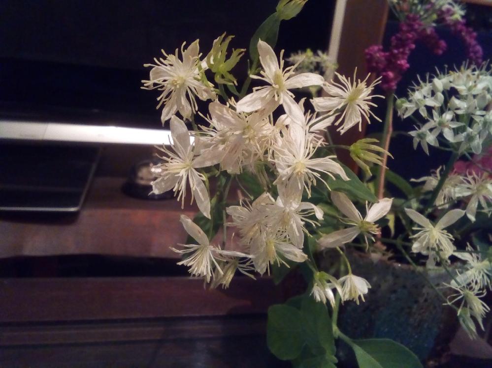 この花の名前を教えてください。 花弁は4枚、放射状の雄蕊は1cmくらいです。