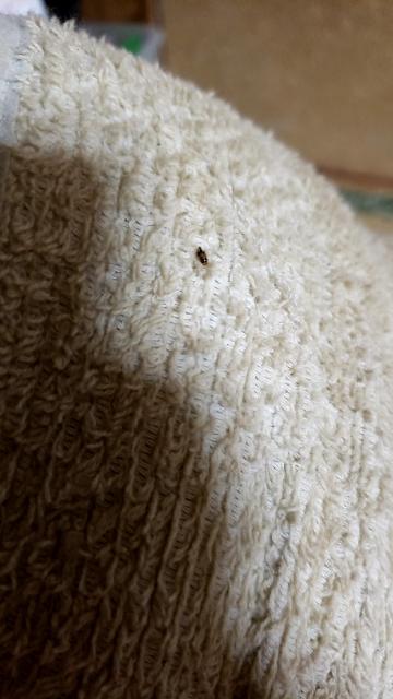 畳の端っことかに多いんですが、この虫の名前はなんですか?