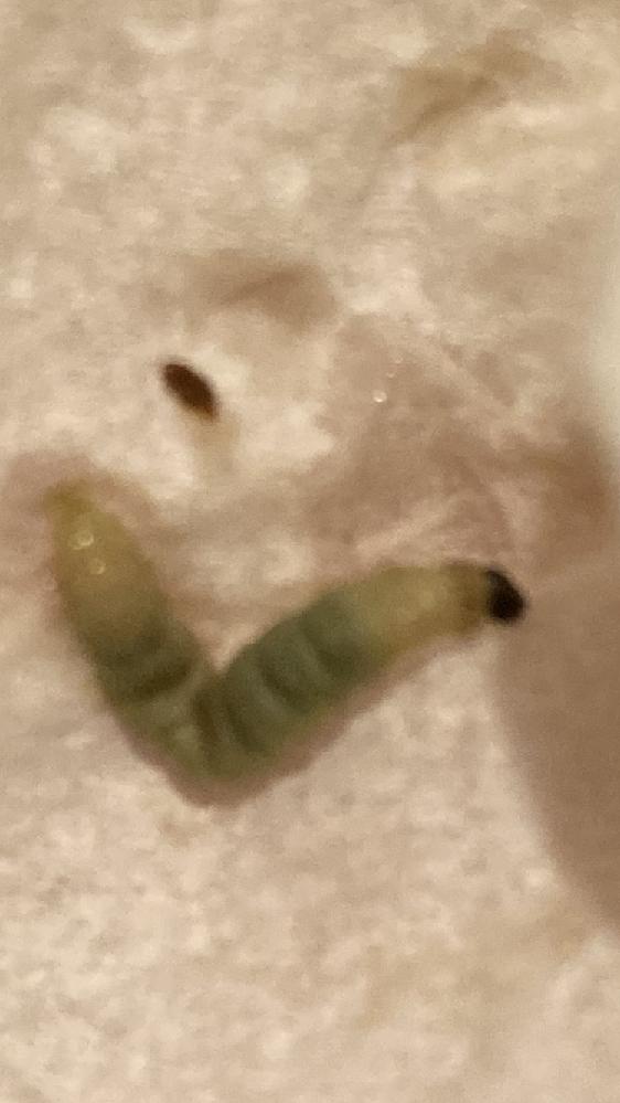 この虫、わかる方いますか?