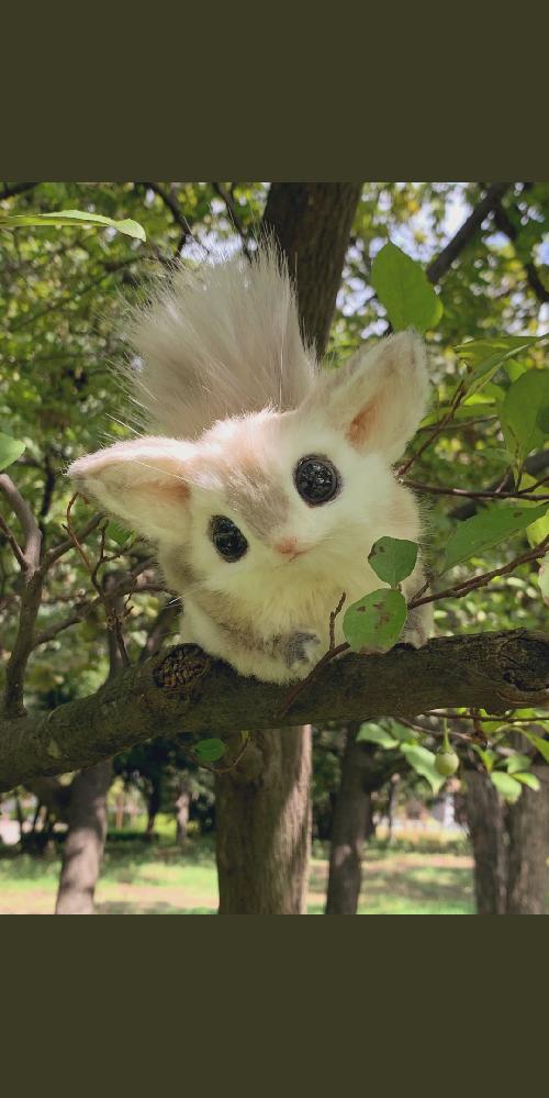 この動物は何ていう種類でしょうか? とても可愛いのですが、調べても分からず。。 ご存じの方がいれば教えて下さい。