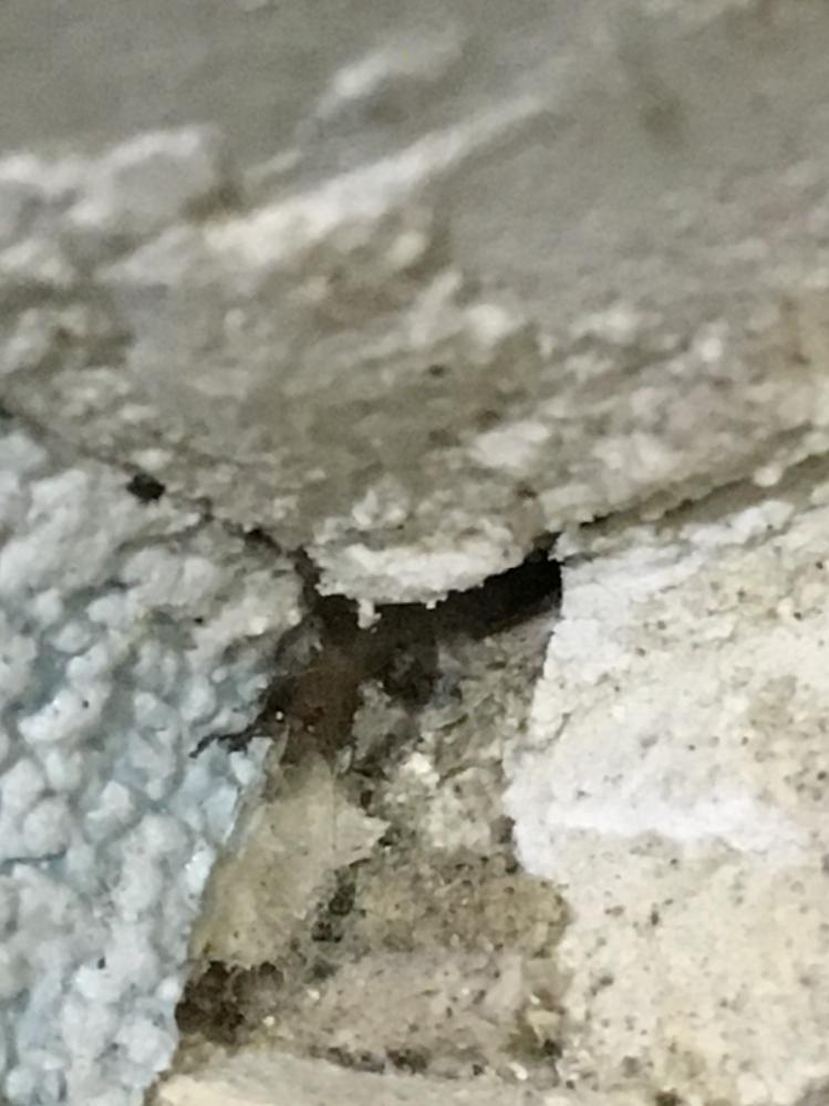 トイレの壁の隅に穴が空いていたのですが、何が原因なのか分かる方いらっしゃいませんか…? 気が付いたら空いていました。 大きさはネジ穴位です。 凄く不安です…