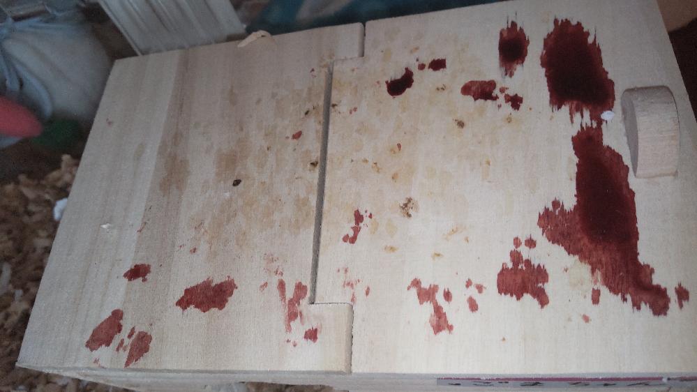 緊急!!うちのハムスターの巣箱の上に写真のような赤いものが垂れていました!!触ったらもう液体じゃなくなって乾いてました。 ハムスターを見ると普通に寝てましたが、お尻に、ほんの少し赤いものが付いていました。 部屋ん歩した時、何かでお尻を切ったんでしょうか? トイレ、巣箱の中、ケージの中は何もありません。 エサはいつもの半分しか食べてません。 または巣箱に持って行ってません。 生理でもないでしょうし、男の子なので、何か怖いです! 今日は忙しいので夜間救急に夜電話しようと思います。 少しでも何か分かる方、どうしたらいいか分かる方、回答お願いします!!