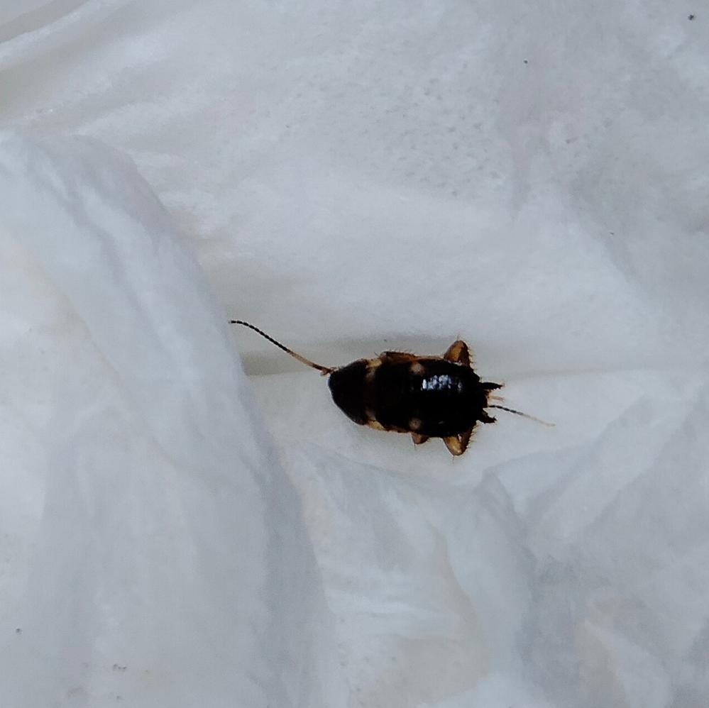 この昆虫の名前を教えて下さい。