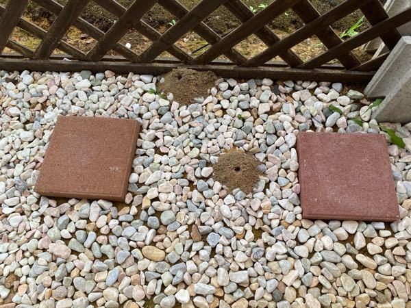 庭の砂利のところに写真のように盛り上がった 土に穴が空いた虫の巣らしきものがいくつも見られます。 これは何の虫の巣かわかる方はいらっしゃいますでしょうか? 見た限り庭に10つ以上、巣のようなものがあります。 少し前には蜂などいろいろな虫が椿の木の周りを飛んでいました。(薬を撒いてからあまり虫はこなくなりました)