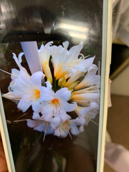 この花の名前教えてください!!