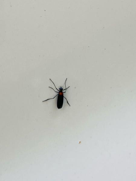 虫に詳しい方教えてください。 画像の虫はなんという虫でしょうか。 家の周りに大量発生していて気持ち悪いです。