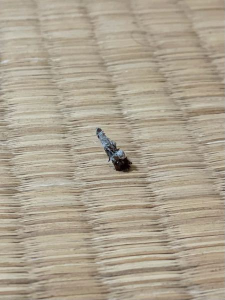 この虫?はミノムシでしょうか? 名前がわかる方、よろしくお願いいたします。