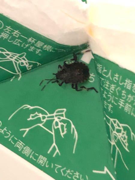 飲み物を開けようとしたら、蜘蛛みたいなカメムシみたいな昆虫が開封口のところに引っ付いていたのですが、これが何なのかわかりますか?めちゃくちゃ焦って、嫌でした。 画質荒くてすみません