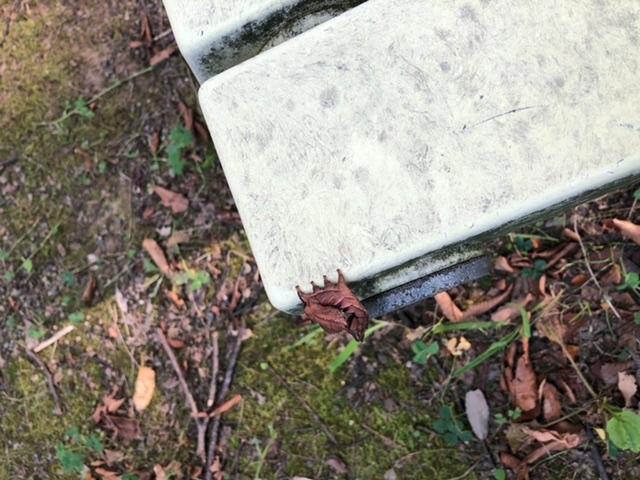 この虫はなんの幼虫ですか?? ベンチにくっついていました。
