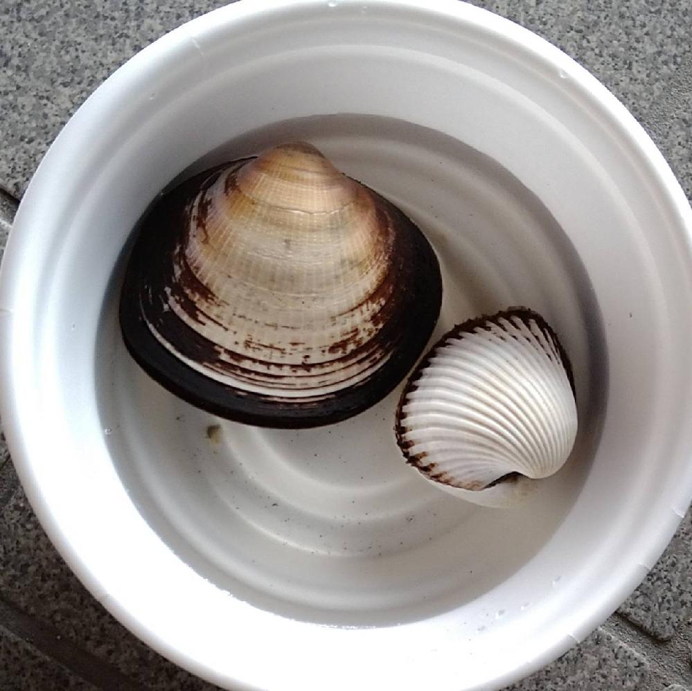 名前を教えてください。 大きい方が15センチくらい、小さい方が8センチくらいです。 食べられる貝でしょうか?
