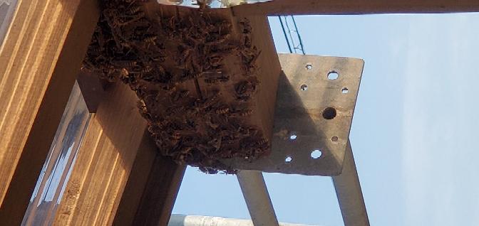 軒下に大きな蜂の巣が出来てて沢山の蜂がいます。 どうしたらよいでしょうか?