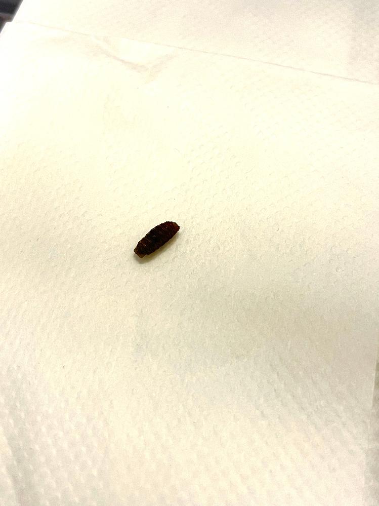 今日家に落ちているのを見つけたのですが、これは何でしょうか? 虫の卵などでしょうか…… 全体的に虫のワームのような周りを囲むようなギザギザがあり、茶色っぽいです。 大きさは1センチもないです。 調べてみるとゴキの卵とは違うとおもうのですが、その他の候補がまったく検討つきません。 どうぞよろしくお願い致します。